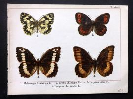 Joanny Martin 1902 Antique Butterfly Print 13